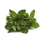 Mint Seedlingcommerce © 2018 8233.jpg